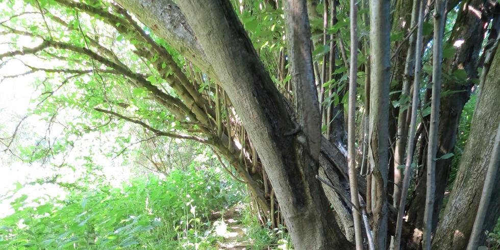Highwoods Autumn Wildlife App Launch