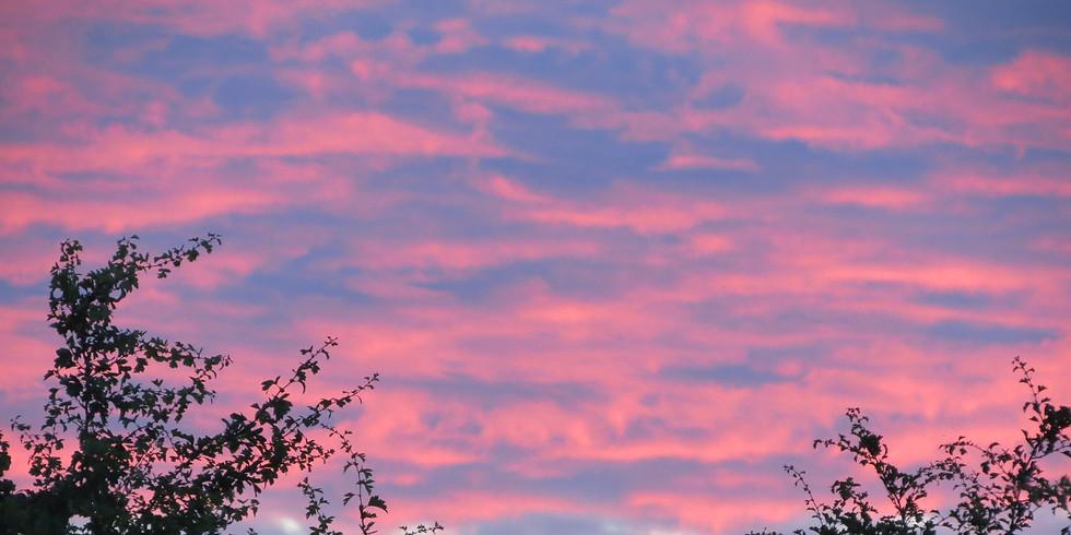 Westlands Country Park Bat Evening