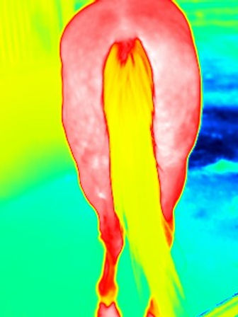 equine thermal image.jpg