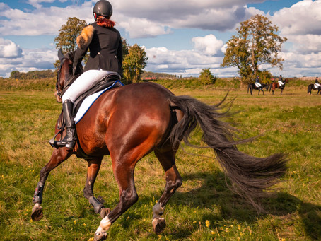 Your horse might have DOMS! - But what is it?
