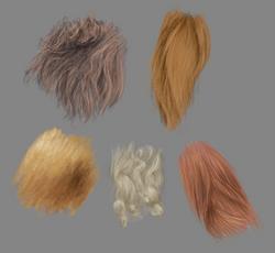 Fur texture studies