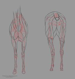 creature anatomy 2