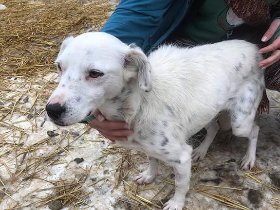 Aderes (Rehomed)