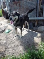 Dolly - (Rehomed)