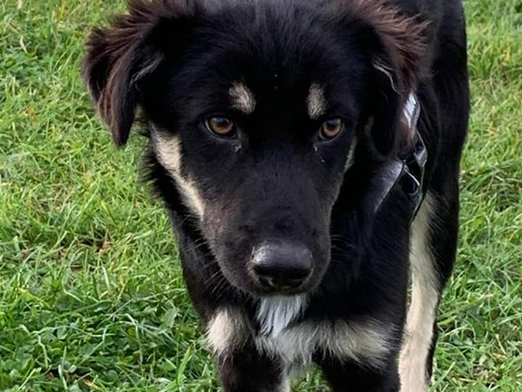 Byron (Rehomed)