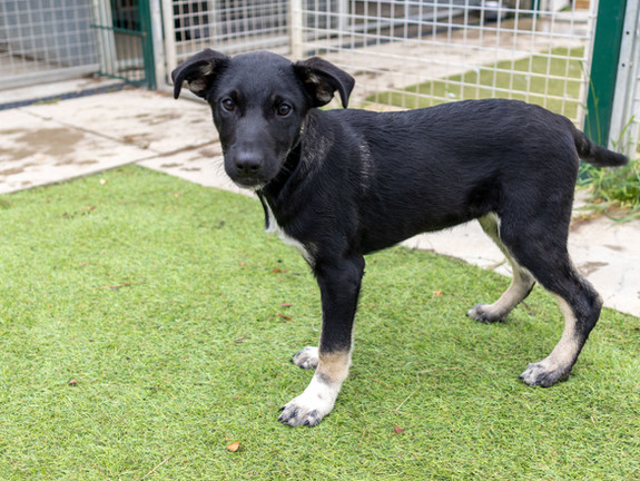 Ash (Rehomed)