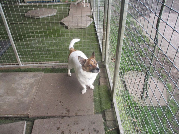 Dash (Rehomed)