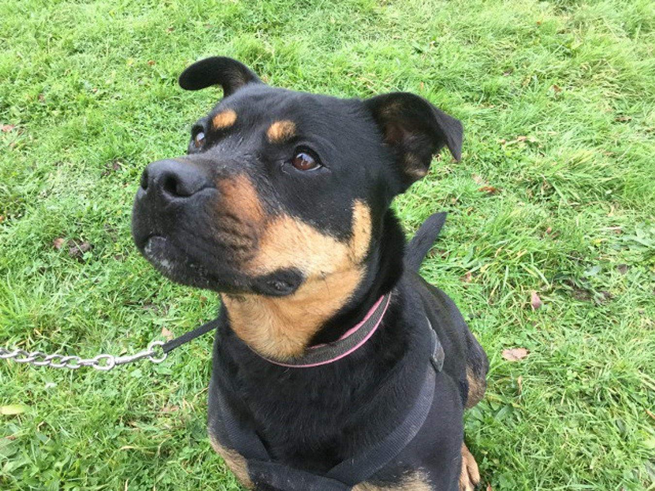 Halfway Home Dog Rescue Rehoming
