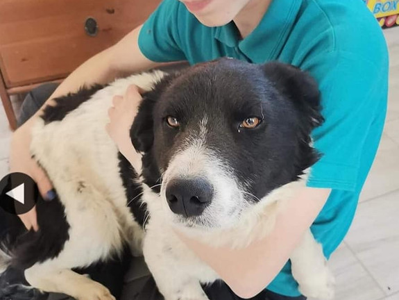 Dixie (Rehomed)