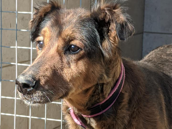 Pansy (Rehomed)