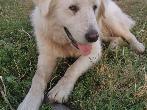 Rehomed - Max