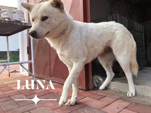 Luna (Rehomed)