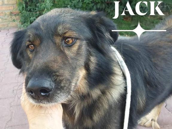 Jack (Rehomed)