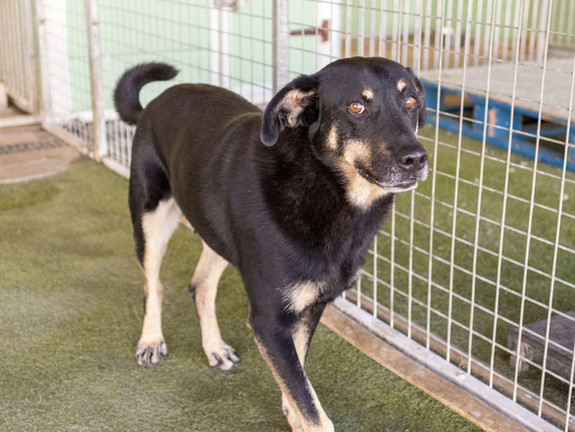 Shadow (Rehomed)