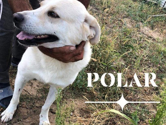 Polar (Rehomed)