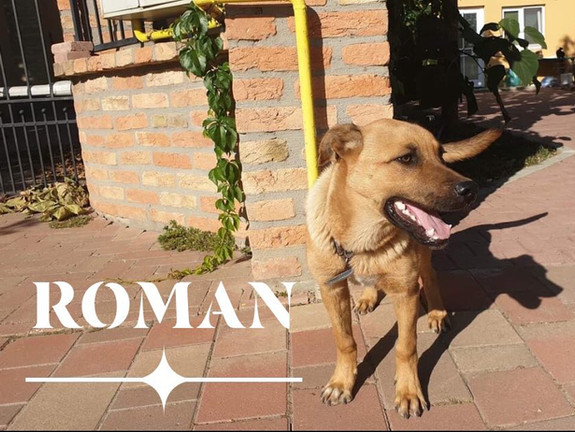 Roman (Rehomed)