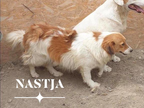 Nastja (Rehomed)