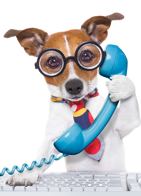 Dog On The Phone.jpg