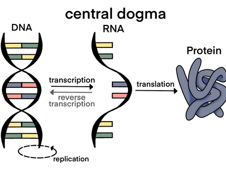 The exception to the Central Dogma