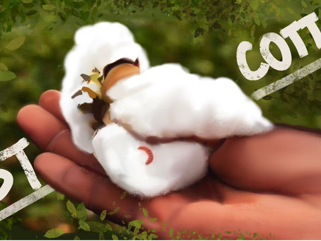 The Effects of a Self-Protecting Cotton