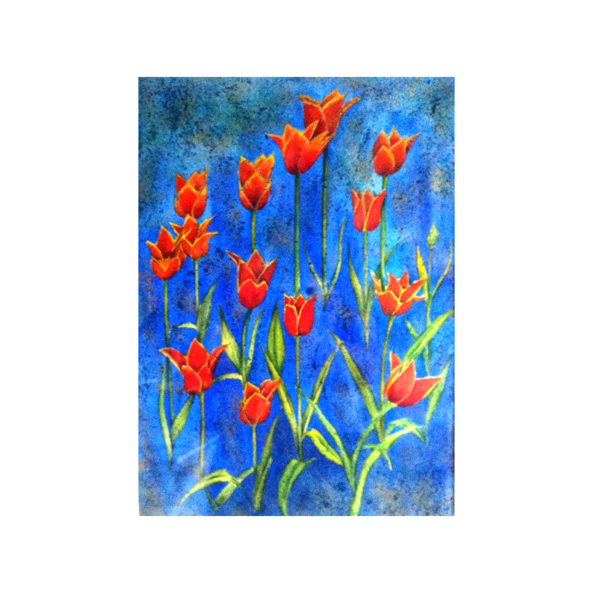 Tulips against Blue