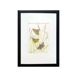 Chequered Skipper Butterflies, Original Artwork Watercolour Painting