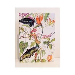 Raj Brookes Butterflies