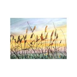 Sunrise through the Reeds