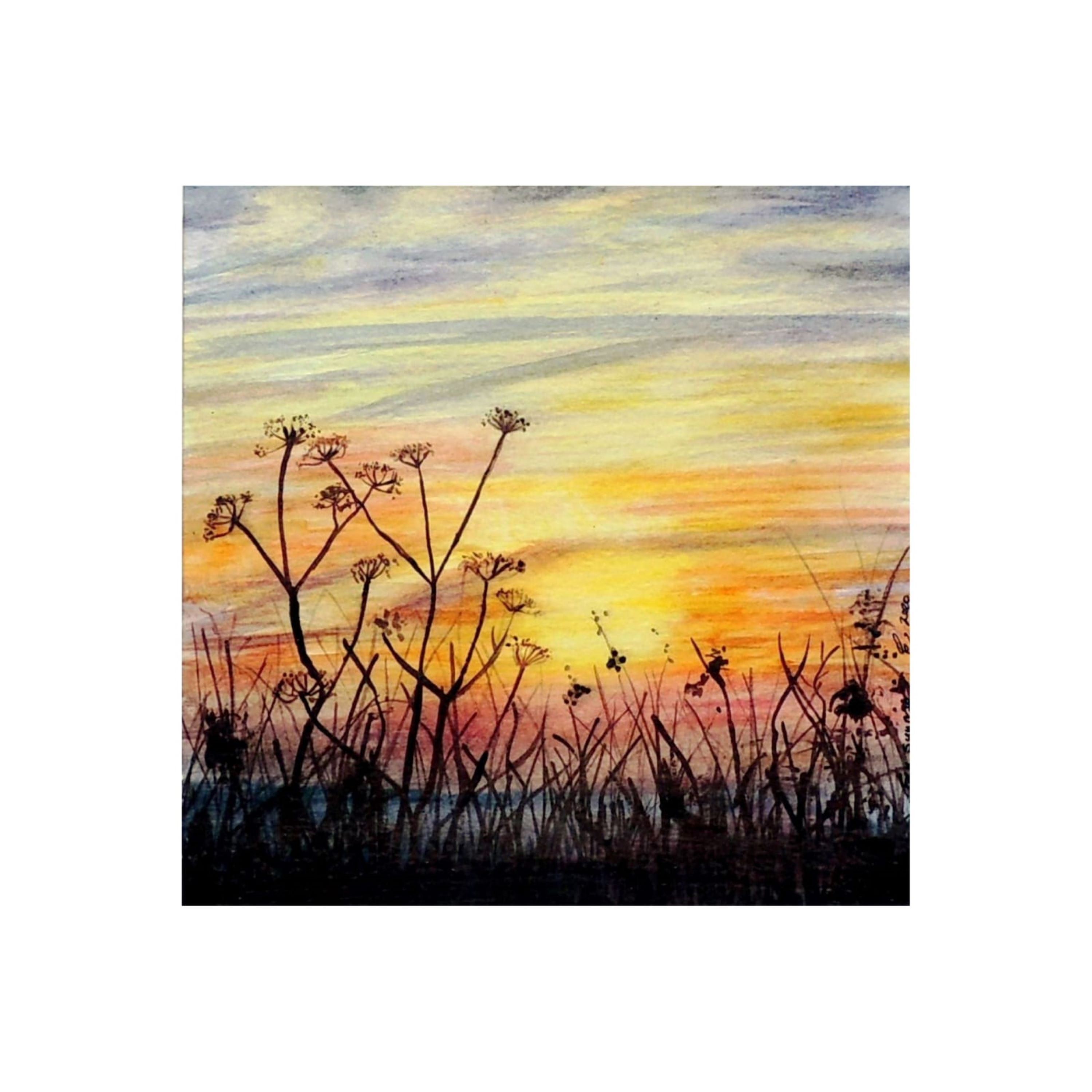 Sunrise & CowParsley (2)