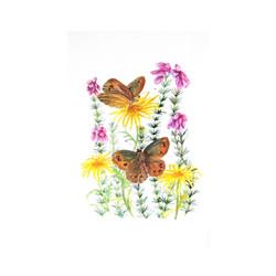 Scotch Argus Butterflies