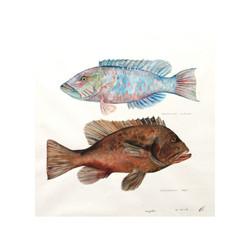 Parrot & Grouper Fish