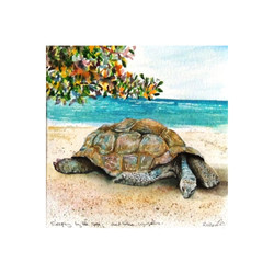 'Sleeping by th e Sea,'Seychelles