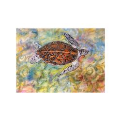 Hawksbill Turtle,Aldabra, Seychelles