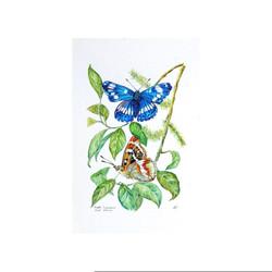 Purple Emperor Butterflies