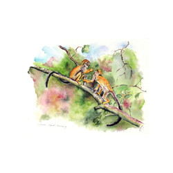 Sibling Love, Common Squirrel Monkeys