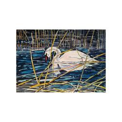 Mute Swan in Reeds