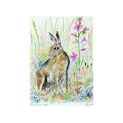 Shy Brown Hare