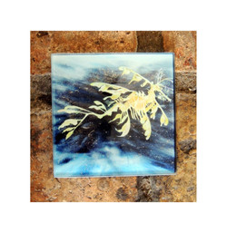 Seadragon Glass Coaster