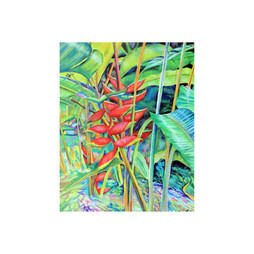 Lobster Claw, Heliconia