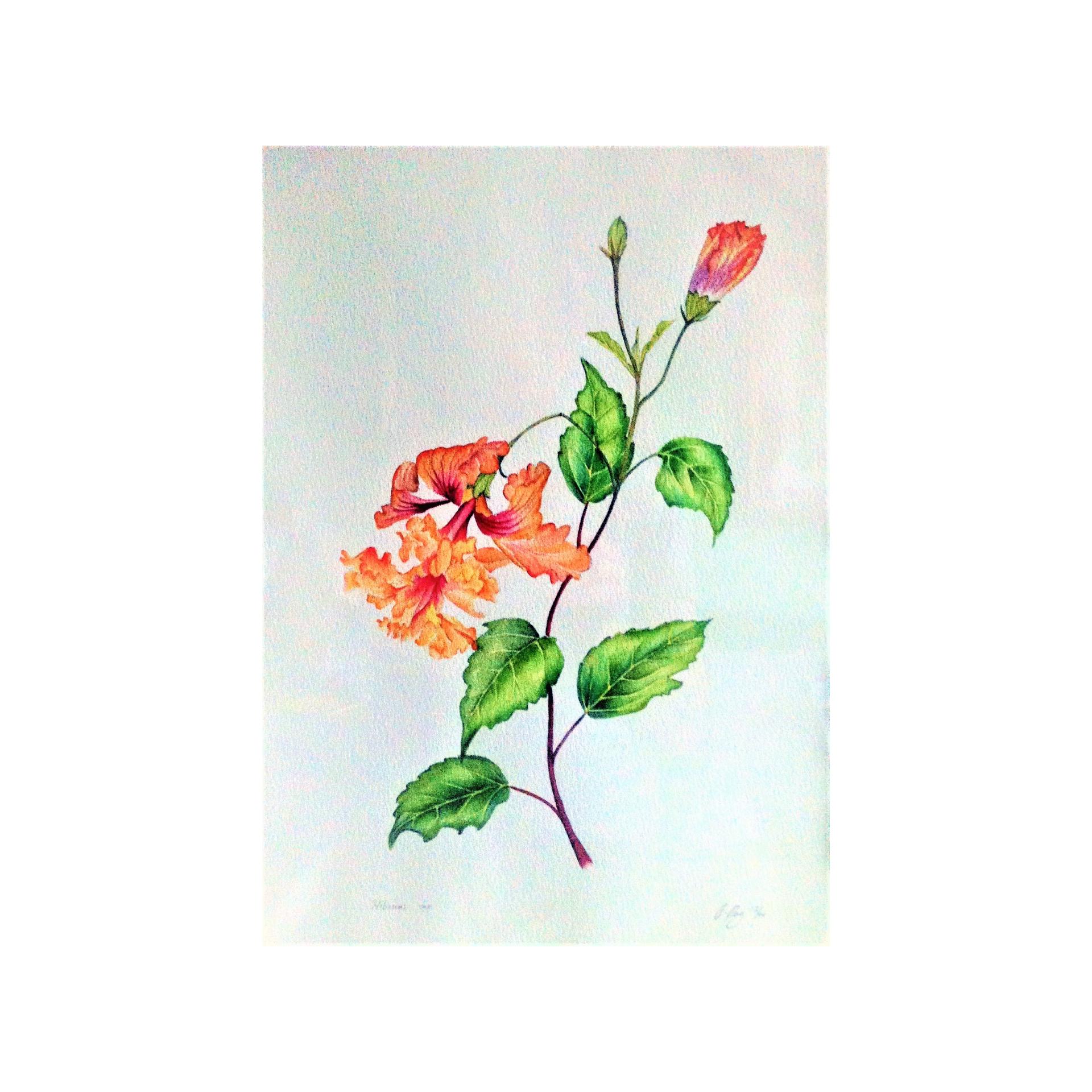 Peach multipetal Hibiscus