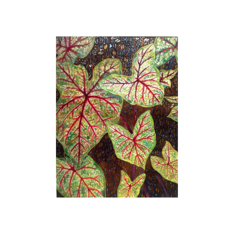 Red Caladium Leaves