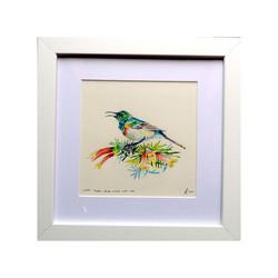 Sunbird,Western Cape