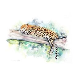 Mias the  Leopard