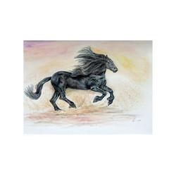 Prancing black horse