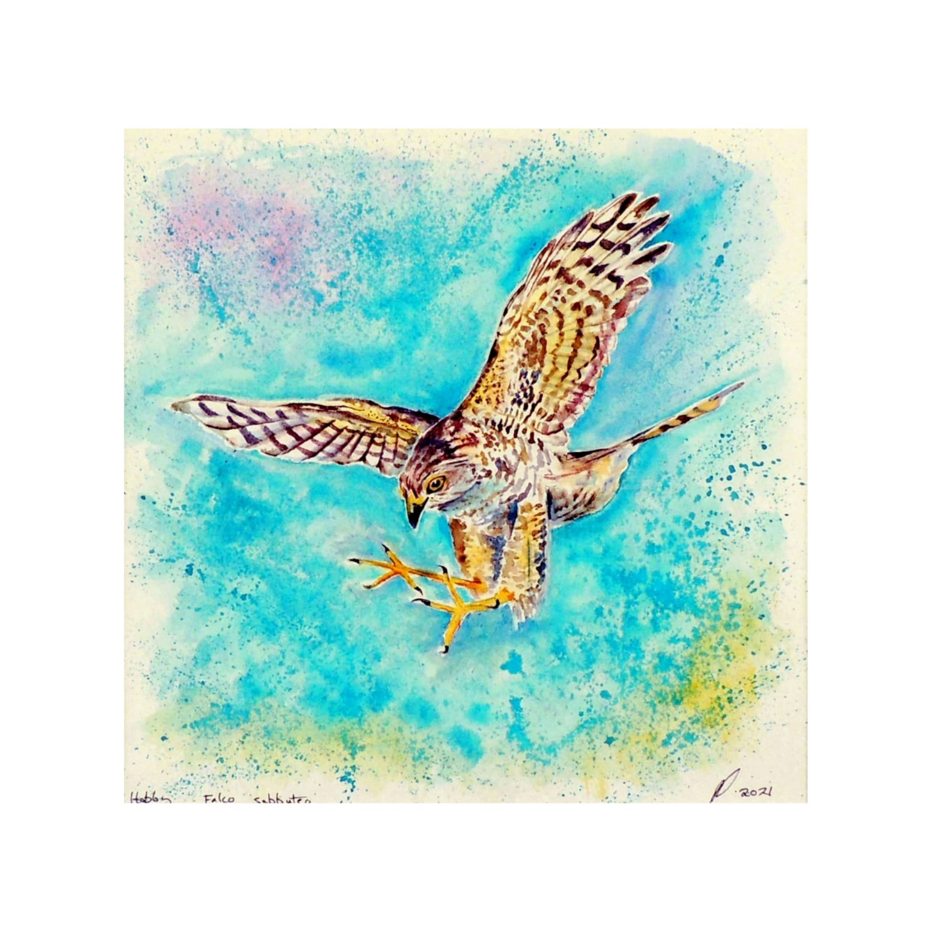 'Swooping In' Hobby Falcon