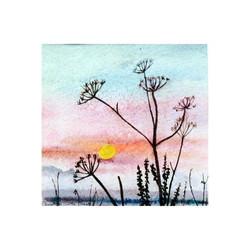 Sunrise & Cow Parsley