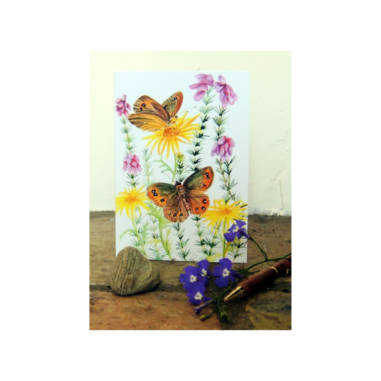 Scotch Argus Butterfly