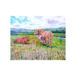 'Familial Love' Highland Cattle