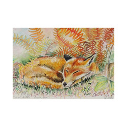 'Do Not Disturb' Young Fox Sleeping