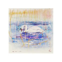 Winter Mute Swan ,Wicken